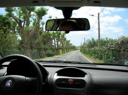 Driving around like tourists.